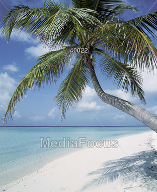 Beaches with Tropical Palm Trees Stock Photo