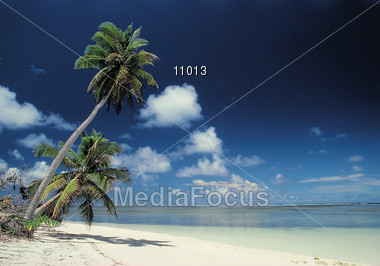 Beaches with Tropical Palm Trees, Maldives Stock Photo