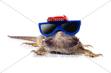 Bearded Dragon In Sunglasses And Cap Stock Photo