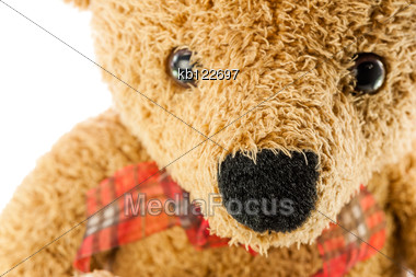 Bears Doll Stock Photo