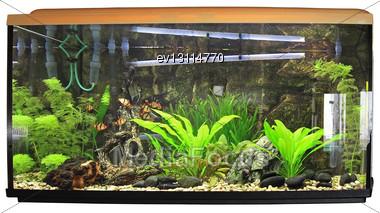 Beautiful Aquarium. Isolated Over White Stock Photo