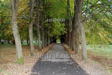 Beautiful Avenue In Park. An Autumn Landscape. Stock Photo