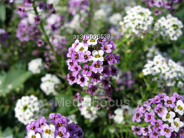 Beautiful Colors Against In The Summer Stock Photo