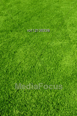 Beautiful Green Grass Texture Stock Photo