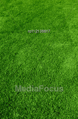 Beautiful Green Grass Texture Stock Photo