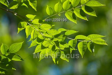 Beautiful Green Leaves Make Pattern Background Stock Photo