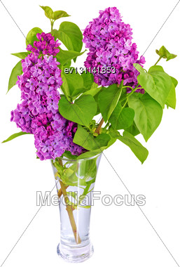 Beautiful Lilac In The Vase. Isolated Over White Stock Photo