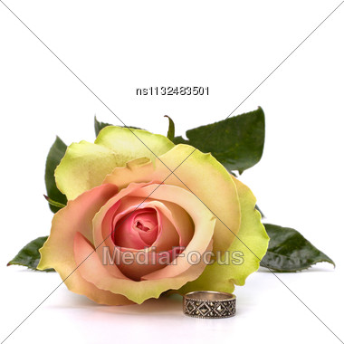 Beautiful Rose With Wedding Ring Isolated On White Background Stock Photo
