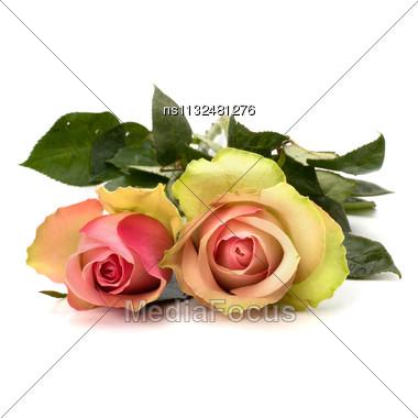 Beautiful Roses Isolated On White Background Stock Photo