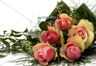 Beautiful Roses Stock Photo