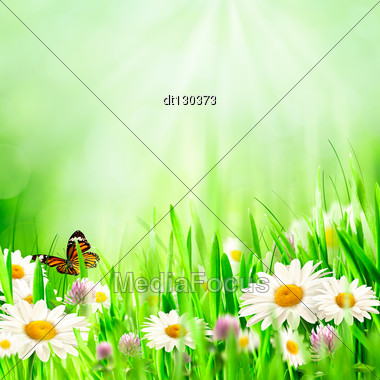 Beautiful Spring Backgrounds With Chamomile Flowers Stock Photo
