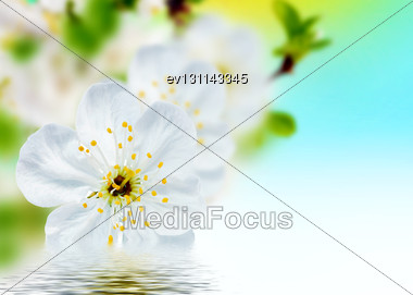 Beautiful Spring Flowers Background Blossoms Stock Photo