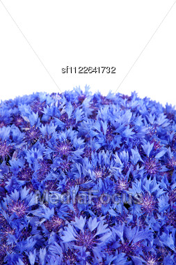 Beautiful Spring Flowers Blue Cornflower On Background. Blue Flowers Pattern Stock Photo