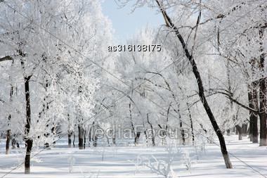 Beautiful Winter Landscape In The Forest, Clear Frosty Day Stock Photo