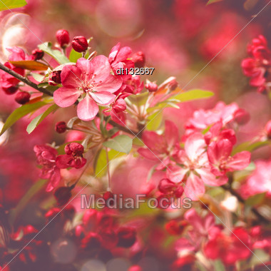 Beauty Abstract Floral Backgrounds For Your Design Stock Photo