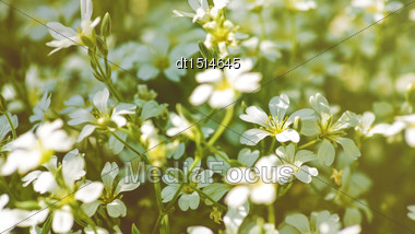 Beauty Daisy Flowers. Panoramic Floral Backgrounds For Your Design Stock Photo