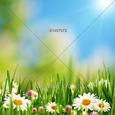 Beauty Daisy Flowers On The Summer Meadow, Abstract Natural Backgrounds Stock Photo