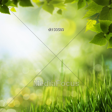 Beauty Forest Backgrounds For Your Design Stock Photo