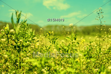 Beauty Meadow, Abstract Natural Backgrounds For Your Design Stock Photo