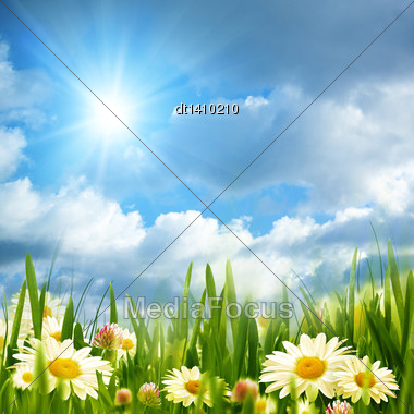 Beauty Meadow With Chamomile Flowers Under Bright Summer Sun Stock Photo