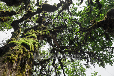 Beauty Patern Of The Rhododendron Tree In The Forest Stock Photo