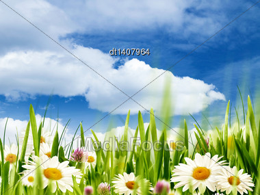 Beauty Summer, Abstract Environmental Backgrounds With Daisy Flowers Stock Photo