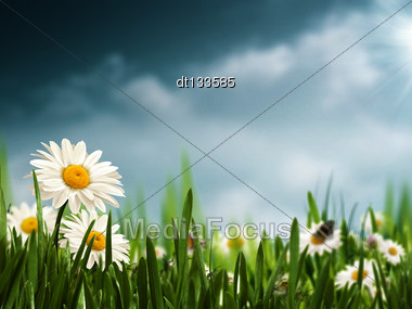 Before The Rain. Natural Backgrounds With Beauty Daisy Flowers Stock Photo