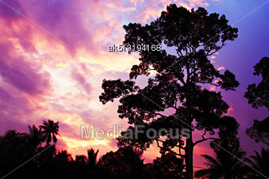 Big Tree On The Beauty Sunset Sky Background Stock Photo