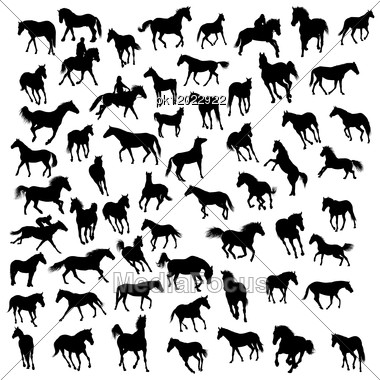 Big Vector Collection Of Different Horses Silhouettes Stock Photo