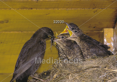 Bird Feeding it's Young Stock Photo
