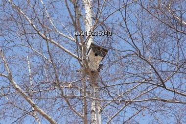 Birdhouse On A White Birch Tree On Blue Sky Background Stock Photo