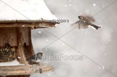 Birds At Feeder In Winter In Ontario Canada Stock Photo
