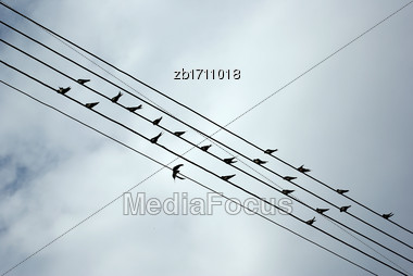 Birds Resting On Electrical Wires Against Clear Blue Sky Stock Photo