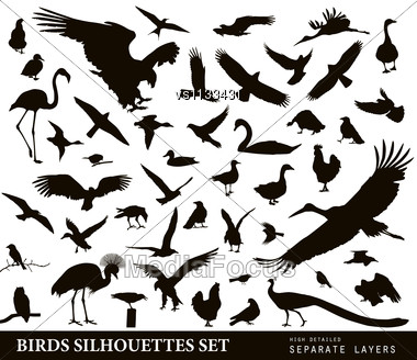 Birds Vector Silhouettes Set. EPS 10 Stock Photo