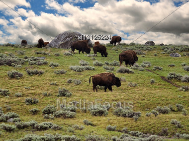 Bisons Feeding In The Mountain Against A Dramatic Sky Stock Photo