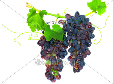 Black Grape On Cane Vine With Leafe. Isolated Over White Stock Photo