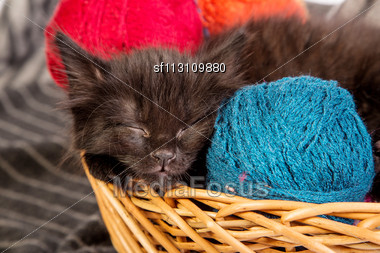 Black Kitten Playing With A Red Ball Of Yarn Isolated On A White Background Stock Photo