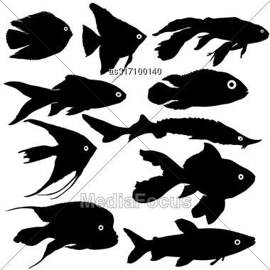 Black Set Silhouette Of Aquarium Fish On White Background Stock Photo