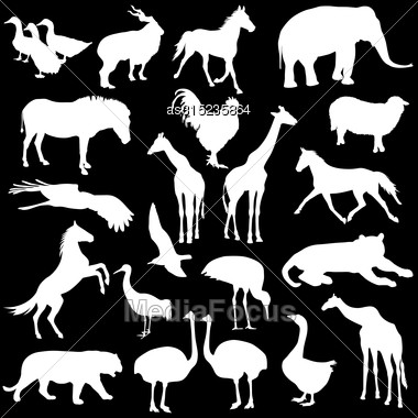 Black Set Silhouettes Zoo Animals Collection On White Background. Vector Illustration Stock Photo