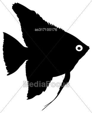 Black Silhouette Of Aquarium Fish On White Background Stock Photo