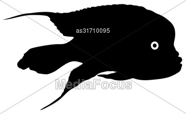 Black Silhouette Of Aquarium Fish On White Background Stock Photo