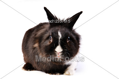 Black And White Little Easter Hare Stock Photo