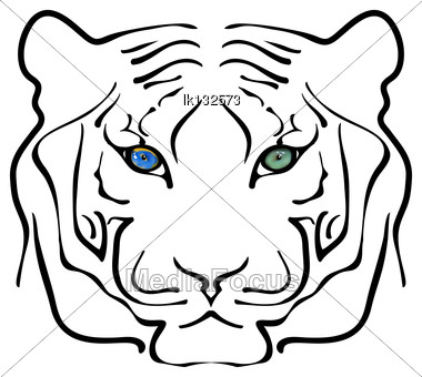 Black And White Portrait Of Big Tiger With Large Living Green Eyes Stock Photo