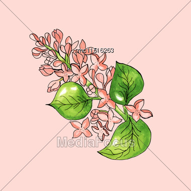 Blossoming Branch Of Apple Tree On Pink Background. Watercolor Floral Illustration. Vector Card Stock Photo