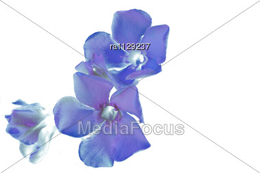 Blue Flowers Abstract As A Fantastic Background Stock Photo