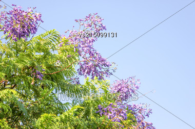 Blue Flowers At Sun Light. Flowers On Sky Background Stock Photo