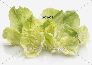 Boston Lettuce Leaves Stock Photo