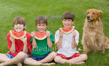 Boys Eating Watermelon with the Dog Stock Photo