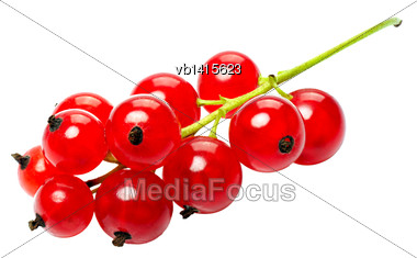 Branch Of Berries, Red Currants, Isolated On A White Background Stock Photo