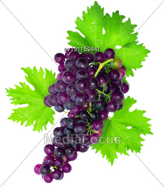 Branch Of Black Grapes With Green Leaf. Isolated Over White Stock Photo